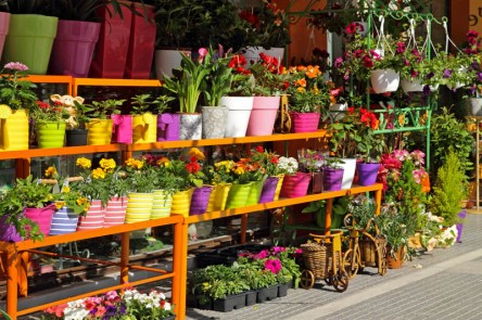 excursions to local Flower markets
