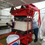 Pressing the apples in the press with fresh juice loading in a barrel.